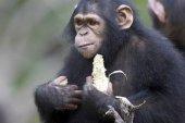 Program TV Evadare în Paradisul Cimpanzeilor