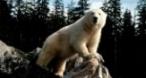 Program tv ieri Alaska Discovery Channel