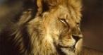 Program tv maine Animale feroce Nat Geo Wild