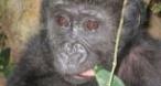 Program tv marti Cum au crescut puii... Animal Planet