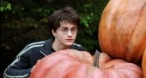 Program tv vineri Harry Potter și Prizonierul din Azkaban MGM