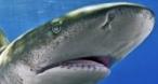 Program tv  Orașul cu rechini Nat Geo Wild