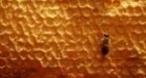 Program tv  Războiul insectelor Nat Geo Wild