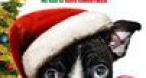Program tv  Singur de Crăciun MGM