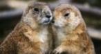 Program tv  SOS Animalele Animal Planet